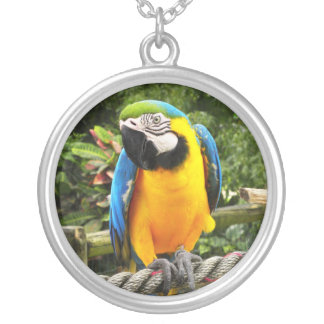 Exotic Macaw Parrot Round Pendant Necklace