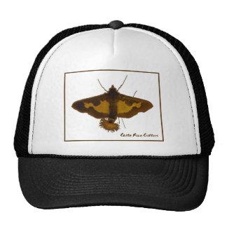 Exotic Moth Cap