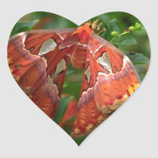 Exotic orange butterfly heart sticker