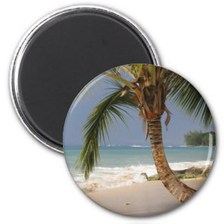 exotic palm tree on beach magnet