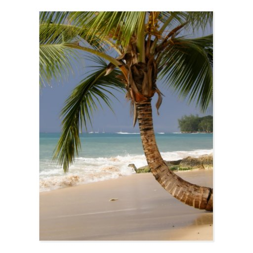 exotic palm tree on beach post cards