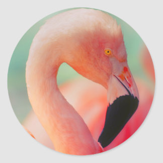 Exotic Pink Flamingo Bird Stickers