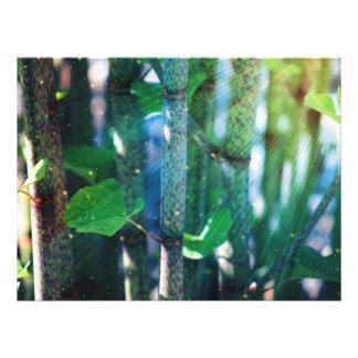 Exotic Plant Photo Print