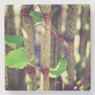Exotic Plant Stone Coaster