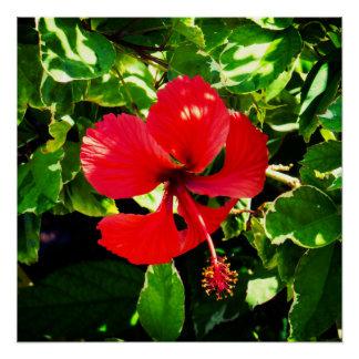 Exotic Red Hibiscus