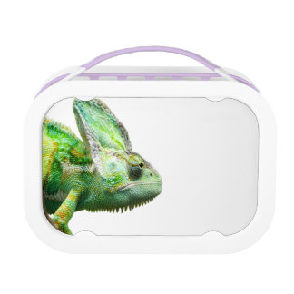 Exotic Reptile Lunch Box