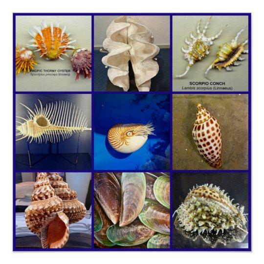 Exotic SeaShell Photography Sanibel Island Florida