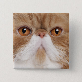 Exotic Shorthair (2,5 years old) 15 Cm Square Badge