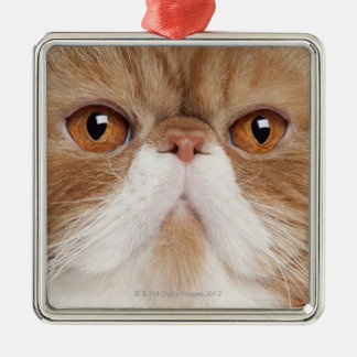 Exotic Shorthair (2,5 years old) Christmas Ornament