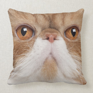 Exotic Shorthair (2,5 years old) Throw Pillows