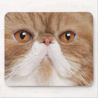 Exotic Shorthair (2,5 years old) Mouse Mat