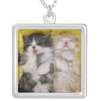 Exotic Shorthair; is Breeders crossed the Square Pendant Necklace