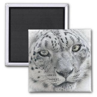Exotic White Snow Leopard Square Magnet
