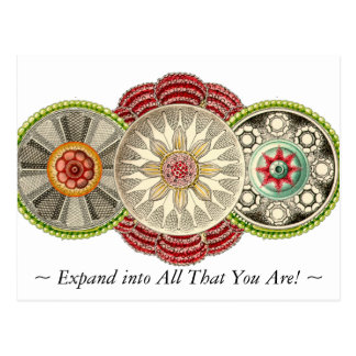 Expand into All That You Are Postcard