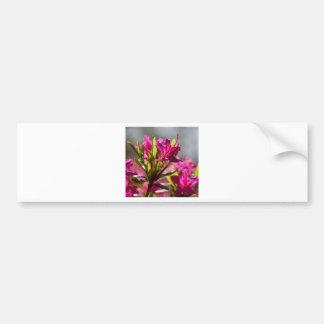 exploding pink flower bumper sticker