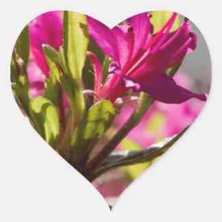 exploding pink flower heart sticker