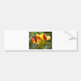 exploding yellow flower bumper sticker
