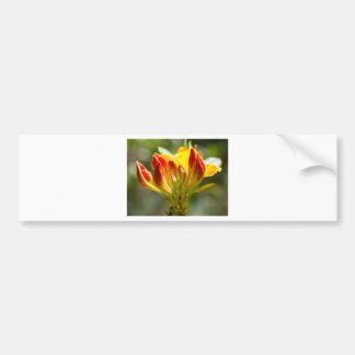 exploding yellow flower bumper sticker
