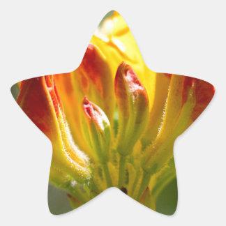 exploding yellow flower star sticker
