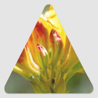 exploding yellow flower triangle sticker