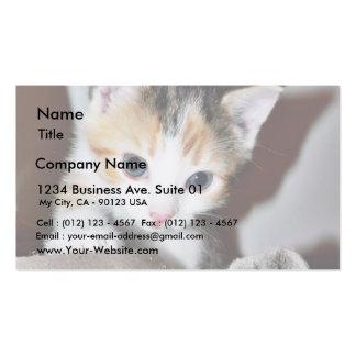 Exploring Kitten Business Card Templates