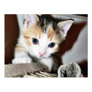 Exploring Kitten Postcard