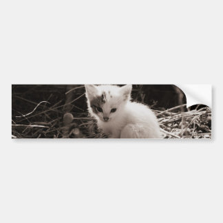 Exploring Kitty Bumper Sticker