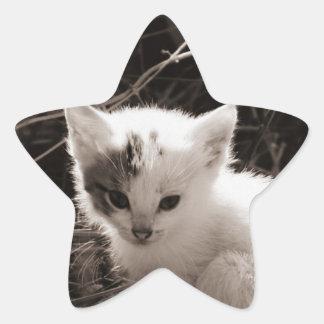 Exploring Kitty Star Sticker