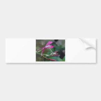 Exquisite In Pink Bumper Sticker