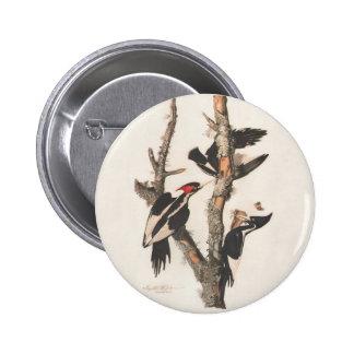 Extinct Birds: Audubon Ivory-Billed Woodpecker 6 Cm Round Badge