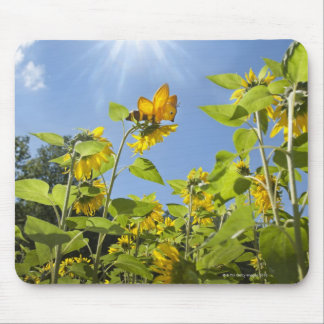 extra large bee on Sunflower Mouse Pad