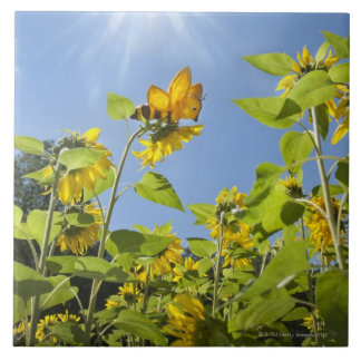 extra large bee on Sunflower Tile