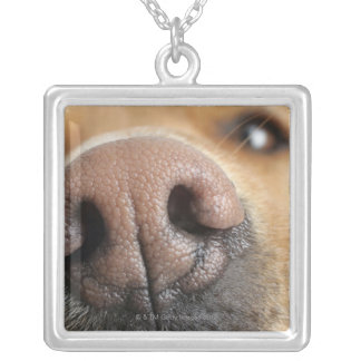 Extreme close-up of a dog nose. silver plated necklace
