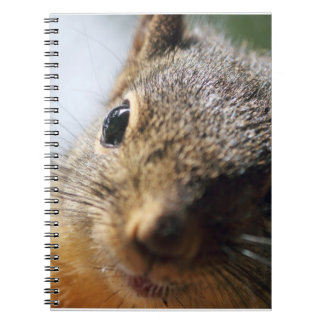 Extreme Closeup Squirrel Picture Notebooks