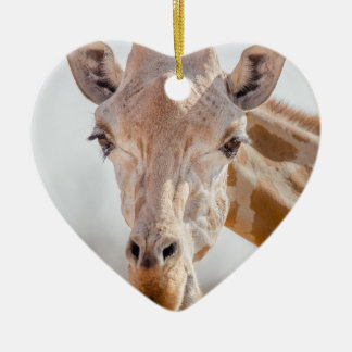 Eye contact with giraffe christmas ornament