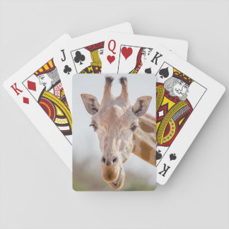 Eye contact with giraffe playing cards