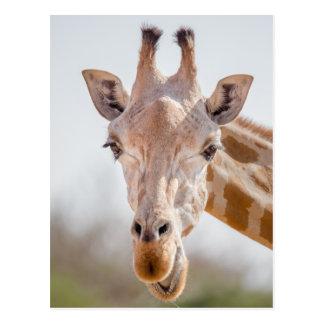 Eye contact with giraffe postcard