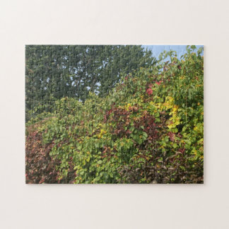 Eye for Detail: Fall Colours Puzzle