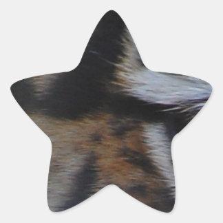 Eye-of-a-tiger412 TIGER PATTERN STRIPES EYE WILD A Star Stickers