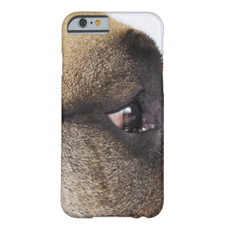 Eye of Great Dane Barely There iPhone 6 Case