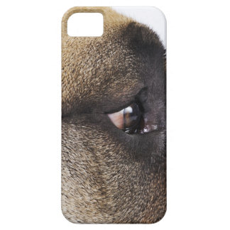 Eye of Great Dane Case For The iPhone 5
