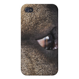 Eye of Great Dane iPhone 4/4S Covers