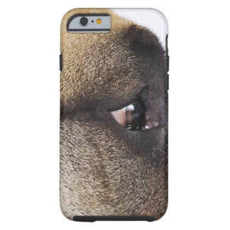 Eye of Great Dane Tough iPhone 6 Case