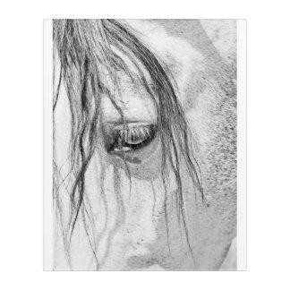eye of horse acrylic print