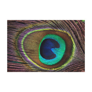 Eye of Peacock Feather Canvas Print