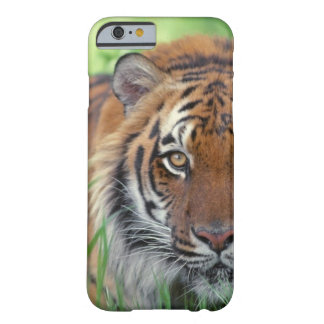 Eye of the Tiger Barely There iPhone 6 Case