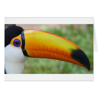Eye of the Toucan Card