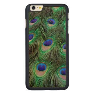 Eye-spots on Male Peacock feather Carved Maple iPhone 6 Plus Case