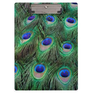 Eye-spots on Male Peacock feather Clipboard