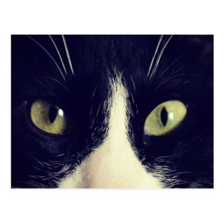 Eyes cat Two-color pencil cat Photography Postcard